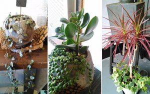 ラスク堂の植物たち